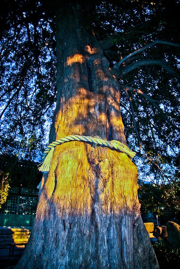 Large tree with kata at Zenyomitsu-ji Buddhist temple Todoroki, Tokyo.