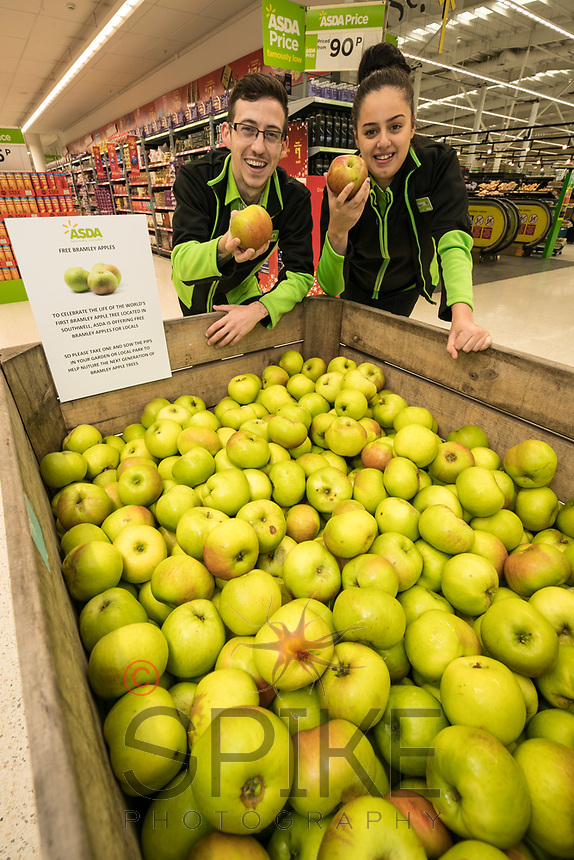 Colleagues Ross Barnes and Sharna Umar pick a Bramley Apple