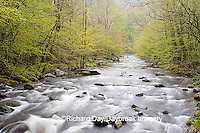 66745-038.12 Middle Prong of the Little River in spring, Tremont Area, Great Smoky Mountain National Park, TN