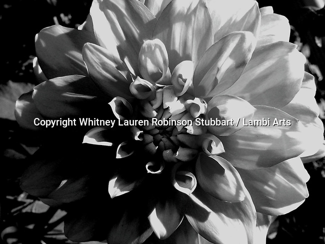 Black & White Photography of all other galleries, animals, flowers, botanical, trees, scenic, food, buildings, architecture, tropical, winter, spring, fall, leaves, etc.