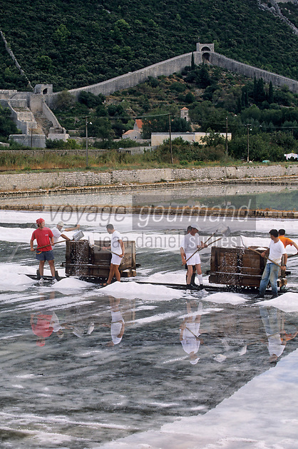 Europe/Croatie/Dalmatie/Ston: les marais salants, récolte du sel en fond les remparts de la ville de ston