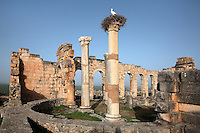Interior of the Roman Basilica, 217 AD, used as courts of justice and city governance, with its semicircular apse and colonnaded facade which lined the Forum or marketplace, Volubilis, Northern Morocco. A stork sits on its nest atop one of the columns. Volubilis was founded in the 3rd century BC by the Phoenicians and was a Roman settlement from the 1st century AD. Volubilis was a thriving Roman olive growing town until 280 AD and was settled until the 11th century. The buildings were largely destroyed by an earthquake in the 18th century and have since been excavated and partly restored. Volubilis was listed as a UNESCO World Heritage Site in 1997. Picture by Manuel Cohen