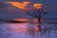 Sunrise light reflected off the water and lone tree of Edisto Beach.