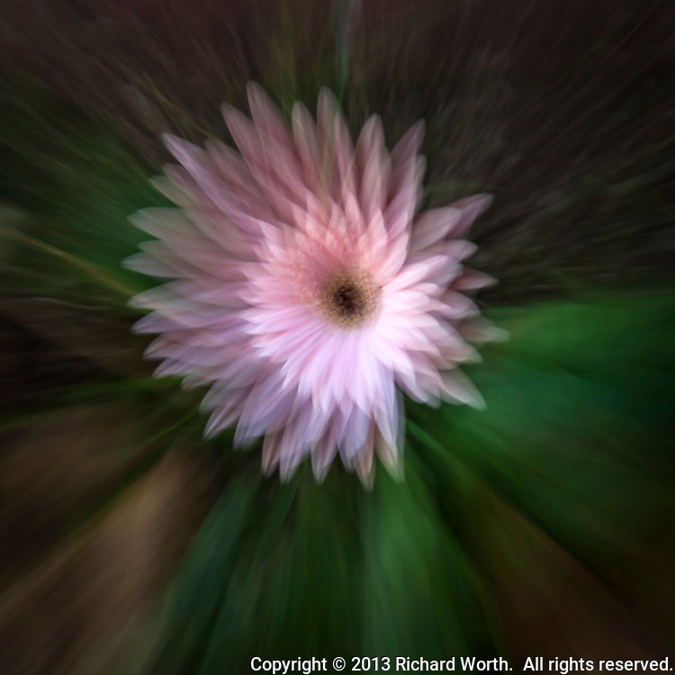 Camera technique has been used to create an abstract interpretation of a pink flower.