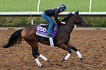 DEL MAR, CA - NOVEMBER 02: Ami's Mesa, owned by Ivan Dalos and trained by Josie Carroll, exercises in preparation for Breeders' Cup Filly & Mare Sprint  at Del Mar Thoroughbred Club on November 2, 2017 in Del Mar, California. (Photo by Sue Kawczynski/Eclipse Sportswire/Breeders Cup)