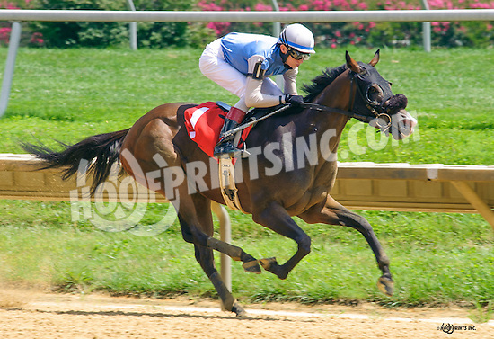 Royal Almighty winning at Delaware Park on 8/4/16