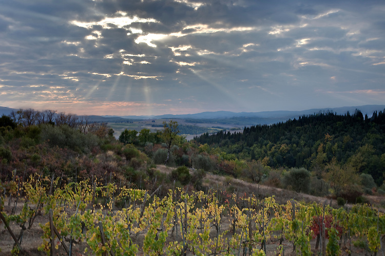 Sunburst over vineyard in Tuscany,Italy