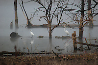 Courtesy photo/TERRY STANFILL<br /> EGRETS IN THE FOG<br /> Egrets step along the shoreline during a foggy morning at Swepco Lake near Gentry. Terry Stanfill of the Decatur area took the picture on Oct. 6.