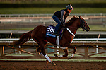 OCT 28: Breeders' Cup Juvenile  entrant Scabbard, trained by Eddie Kenneally, at Santa Anita Park in Arcadia, California on Oct 28, 2019. Evers/Eclipse Sportswire/Breeders' Cup