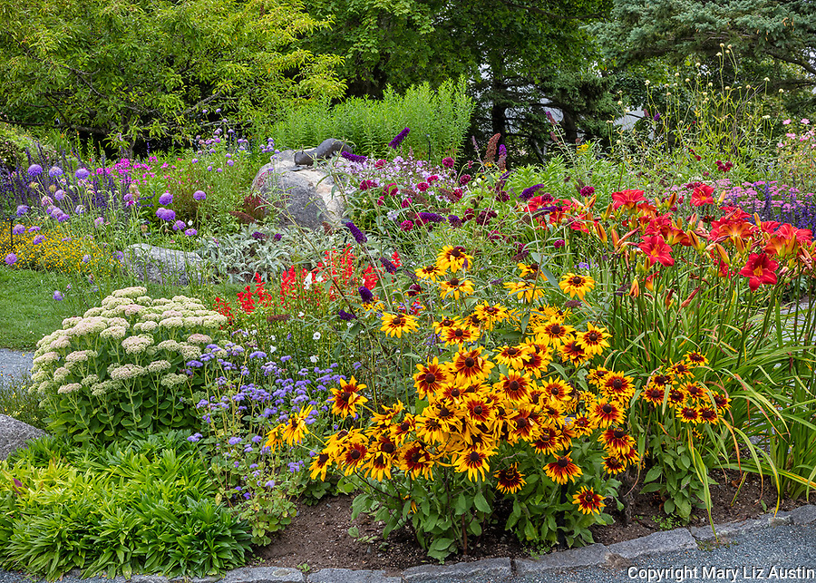 Southwest Harbor, Maine: Flowering gardens and pathways in the Charlotte Rhoades Park and Butterfly Garden. Featuring Rudbeckia 'Denver Daisy', day lilies, and buddleia in the foreground.