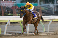 SHINAGAWA,JAPAN-DECEMBER 29: Copano Rickey #3,ridden by Hironobu Tanabe,wins the Tokyo Daishoten at Ohi Racecourse on December 19,2017 in Shinagawa,Tokyo,Japan (Photo by Kaz Ishida/Eclipse Sportswire/Getty Images)