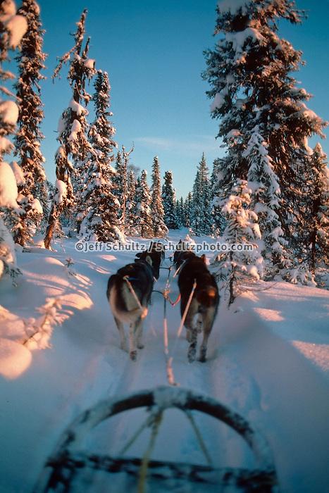 Musher View Of Dog Team On Trail Sc Alaska Winter