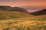 Golden sunset light on green grass field and hills in spring above the Pacific Ocean water, Santa Cruz Island, Channel Islands, California