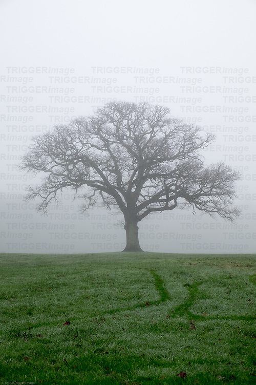 Tree in a misty park
