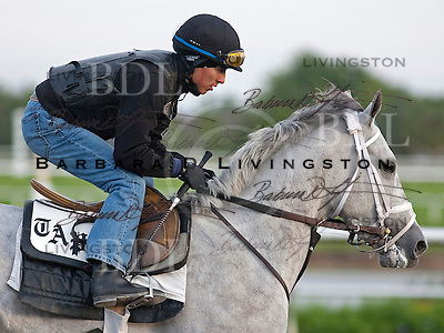 Palm Meadows Training Center