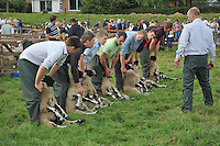 Judging Swaledale sheep, Garstang Show, Lancashire....Copyright..John Eveson, Dinkling Green Farm, Whitewell, Clitheroe, Lancashire. BB7 3BN.01995 61280. 07973 482705.j.r.eveson@btinternet.com.www.johneveson.com