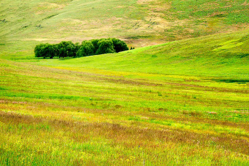 Pasture with wildflowers. Zumwalt Prairie Preserve, Oregon