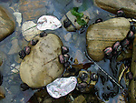 turban snails and abalone shells
