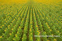 63801-11317 Sunflower field-aerial Jasper Co.  IL