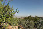 Israel, Jerusalem mountains. The Binlical Garden in Yad Hashmona