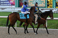 January 17, 2015: Dekabrist (KY) with Sal Gonzalez Jr. in the Lecomte Stakes at the New Orleans Fairgrounds course. Steve Dalmado/ESW/CSM