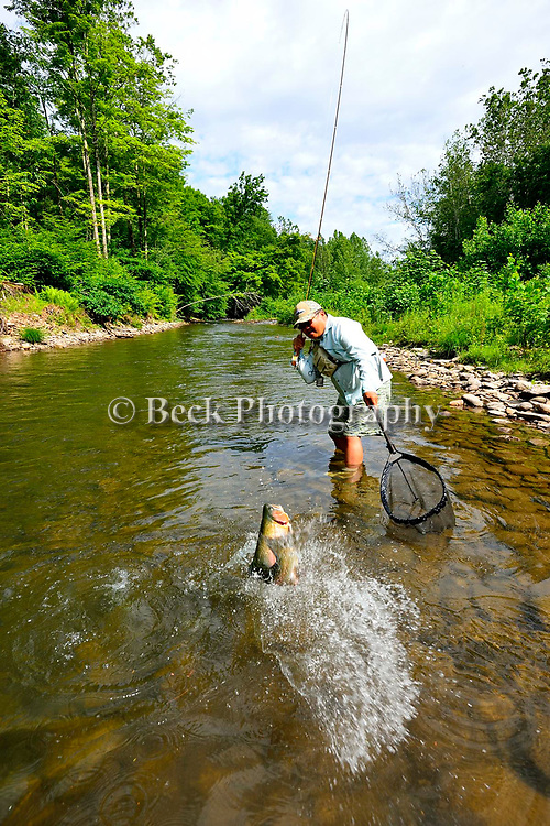 Small stream, rainbow trout, fly fishing, Ron Taniwaki, Pennsylvania