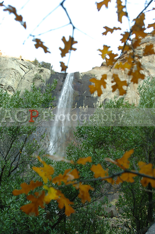 Bridalveil Falls is framed by Fall colors in Yosemite National Park in California November 22, 2008. (Photo Copyright Alan Greth)