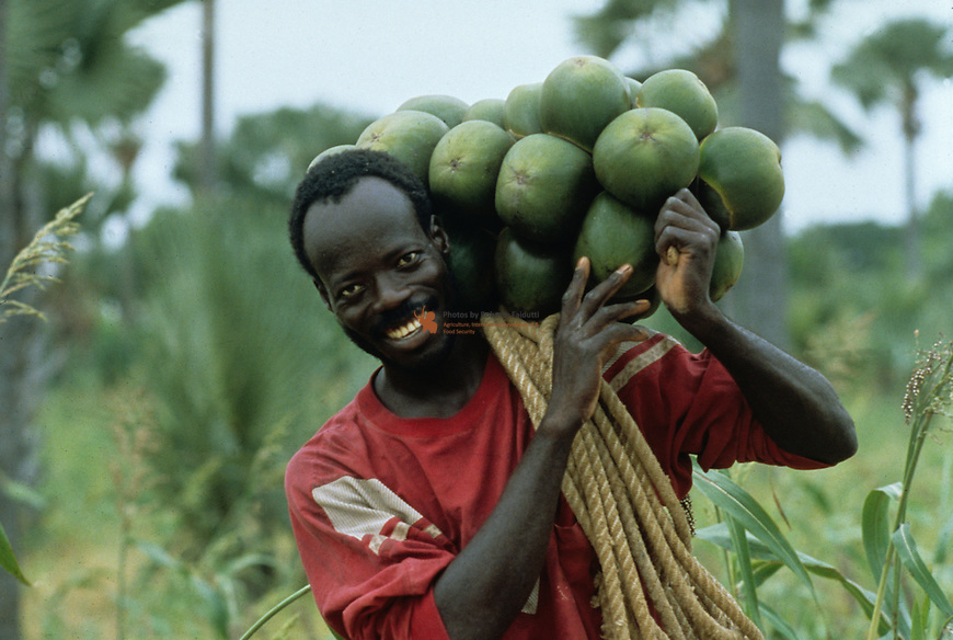Farmer carrying Borassus aehtiopium fruit
