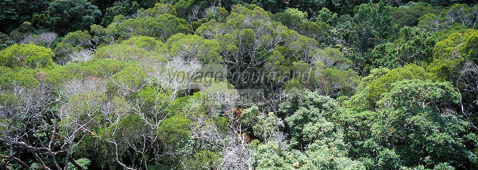 Océanie/Australie/Queensland/Kuranda: la rainforest