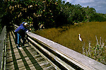 FL: Florida Everglades National Park, birders, birdwatching, egret, Mahogany Overlook..Photo Copyright: Lee Foster, lee@fostertravel.com, www.fostertravel.com, (510) 549-2202.Image: flever266