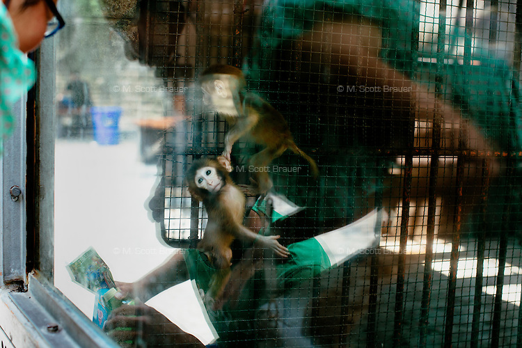 People look at monkey enclosures in the Chongqing Zoo in Chongqing, China.