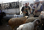 Palestinians gather around goats and sheep for sale at a market in preparation for the upcomming Eid al-Adha festival in the West Bank city of Nablus, Wednesday Nov. 3, 2011. Muslims worldwide are preparing for the Eid al-Adha festival, by slaughtering of sheep, goats, cows or camels . Photo by Wagdi Eshtayah