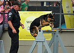 Vancouver, Canada, Aug 6th 2009. World Police and Fire Games, Police Service Dog Competition.  Corporal Joe Hall, Verdes Estates Police Department, California, USA, and his Dog, Grim, a seven-year-old German Shepherd, make their way around the Agility portion of the competition.  Joe and Grim earned second place in the Protection portion of the competition later that day.  Photo by Gus Curtis.