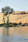 Arbre au bord du Nil.