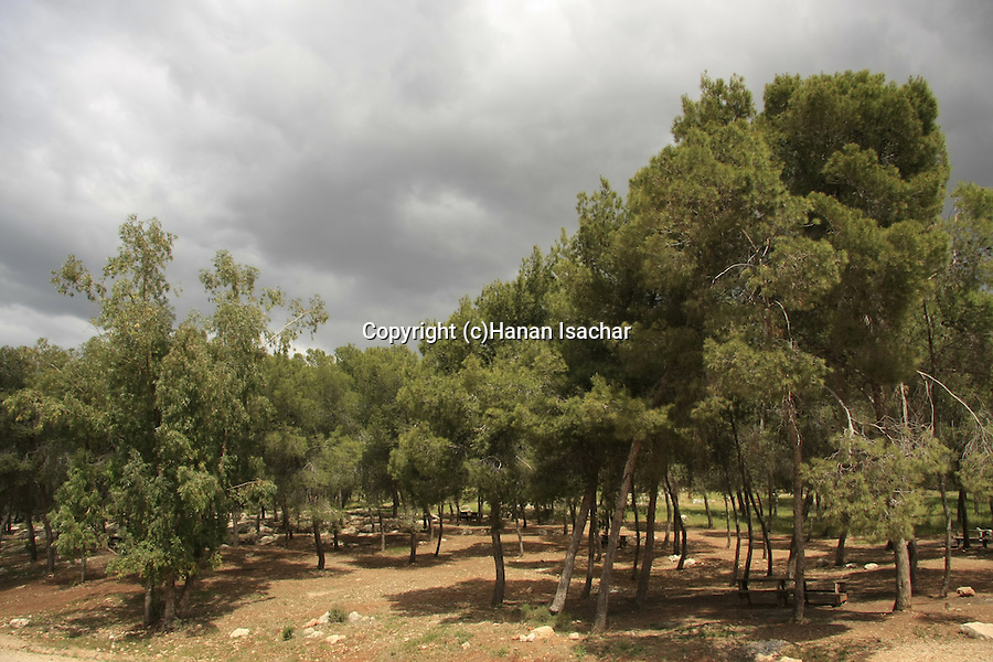 Israel, Mount Picnic area by Gilboa Scenic Road