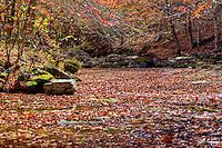 Smith Creek Nature Preserve