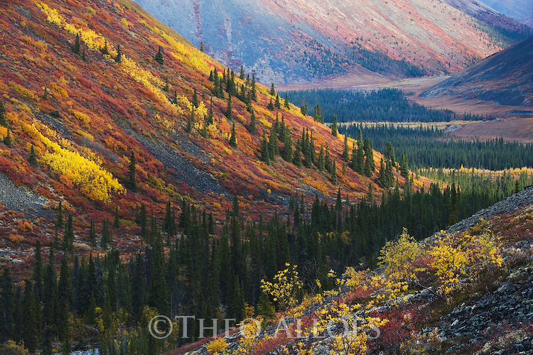 Fall in the Ogilvie Mountains near the Dempster Highway in northern Yukon; red color are the leaves of dwarf birches; Canada