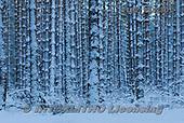 Marek, CHRISTMAS LANDSCAPES, WEIHNACHTEN WINTERLANDSCHAFTEN, NAVIDAD PAISAJES DE INVIERNO, photos+++++,PLMPRES2801,#xl#