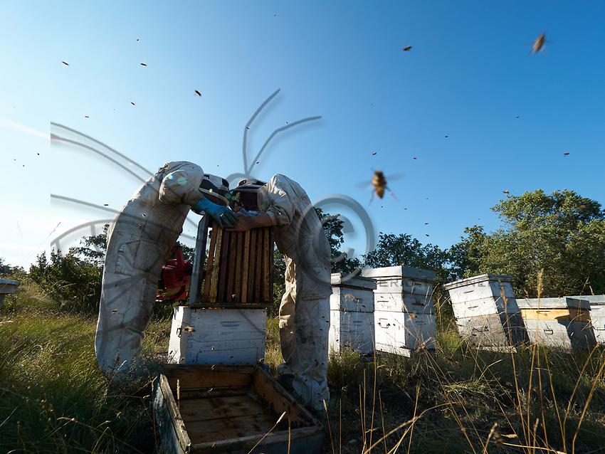 Summer harvest in the southern Ard&egrave;che. The honey chambers - the part of the hive where the bees stock the surplus honey &ndash; are taken out by the beekeepers who can in that way harvest the mono-floral honey several times during the season.<br /> R&eacute;colte d&rsquo; &eacute;t&eacute; dans le sud de l&rsquo;Ard&egrave;che. Les hausses - la partie de la ruche ou est stock&eacute; le surplus de miel par les abeilles &ndash; sont retir&eacute;es par les apiculteurs qui peuvent ainsi faire plusieurs r&eacute;coltes de miel mono-floraux dans la saison.