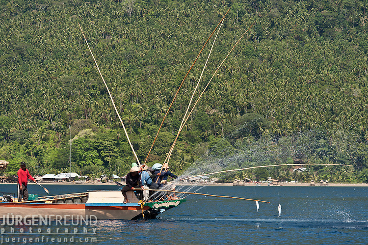 Funae fishermen catching skipjack tuna near Manado Tua using anchovies as live bait. The catch is landed around midday in the Manado auction market. The entire fishing trip, from buying the bait to selling the fish at the market, takes 12-17 hours. Fisherman from Bunaken Island, start their hard work when they buy live anchovies in Tanawangko, on mainland Manado, at midnight. When there are no anchovies to buy, they catch their own live bait. The funae boat has a huge aquarium hole inside its main belly to keep the live bait. Later on, this belly serves as the holding area for the day's catch.