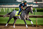 LOUISVILLE, KENTUCKY - MAY 02: Tacitus prepares for the Kentucky Derby at Churchill Downs in Louisville, Kentucky on May 01, 2019. Evers/Eclipse Sportswire/CSM