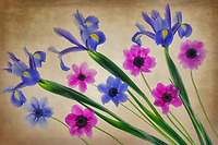 Close up of iris and anemone flowers.