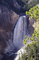 Lower Falls of the Yellowstone, Yellowstone National Park, Wyoming. The lower falls are 308 feet high, or almost twice as high as Niagara. The volume of water is in no way comparable to Niagara as the width of the Yellowstone River before it goes over the lower falls is 70 feet, whereas Niagara is a half mile.