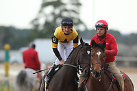 HOT SPRINGS, AR - FEBRUARY 19: Seven Trumpets #6, with jockey Robby Albarado aboard before the running of the Southwest Stakes at Oaklawn Park on February 19, 2018 in Hot Springs, Arkansas. (Photo by Justin Manning/Eclipse Sportswire/Getty Images)