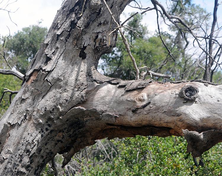 Seen on a hike thru Santa Roas Plateau Ecological Reserve, in Murrieta, CA, on Saturday, April 30, 2016. Photo by Jim Peppler. Copyright Jim Peppler  2016.