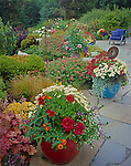 Vashon Island, WA: Flagstone patio featuring colorful pots iwth geraniums, chrysanthemums, and daisies edged by perennial garden beds