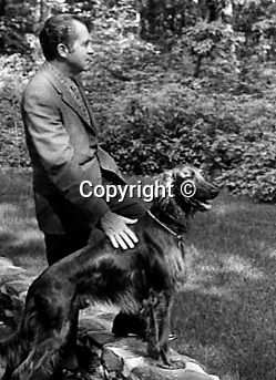 37th President of the United States Richard M. Nixon with his dog, Richard Nixon was born in Yorba Linda California and attended Whittier College and Duke University law school, US Navy House of Representatives and United States Senate, Vice President under Dwight D. Eisenhower, Impeachment for his role in Watergate scandal,