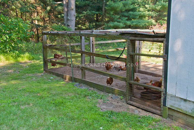 Chicken coop with farm poultry birds animals protected behind wire cage