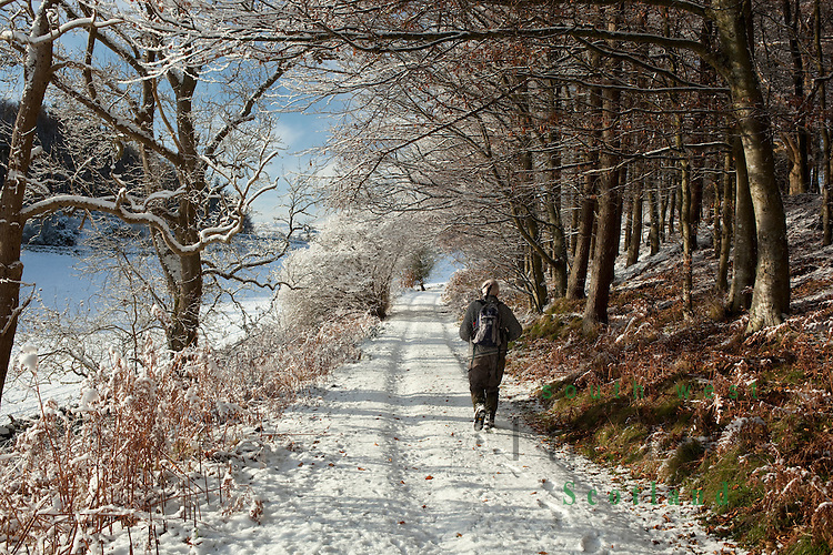 Scenic winter walking in the snow along a old cart track at the edge of Castle Hill wood near Almorness House Galloway Scotland UK