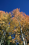 California, Lake Tahoe.  Fall color near Lake Tahoe.  Photo cataho106.  Photo copyright Lee Foster, 510/549-2202, lee@fostertravel.com, www.fostertravel.com